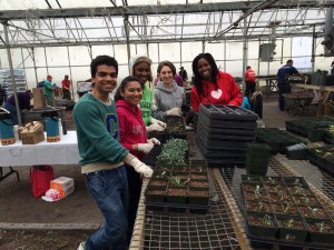 Volunteers transplanting seedlings
