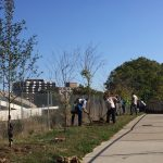 New Trees along East Coast Greenway